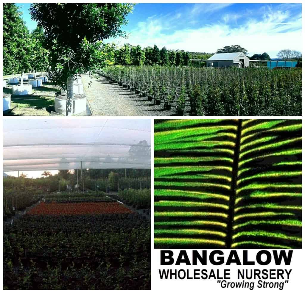 bangalow Collage